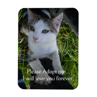 Cat:Please adopt me..will love you forever magnet