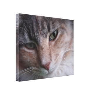 Cat Portrait Canvas Prints