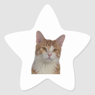 Cat Portrait Star Sticker