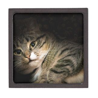 Cat posing keepsake box