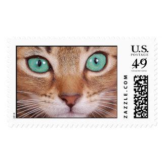 cat postage