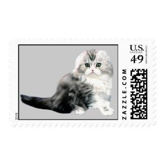 Cat Postage Stamp
