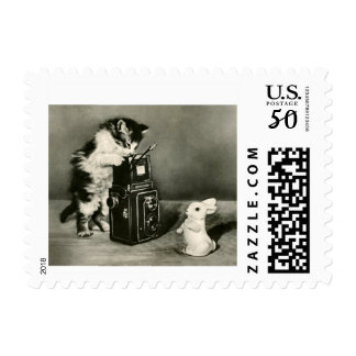 cat postage stamp cat photographer & camera
