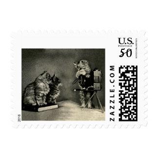 cat postage stamp cat photographer camera kittens