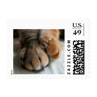 cat postage stamp cats paws together
