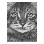 Cat postcard. Pencil drawing Postales