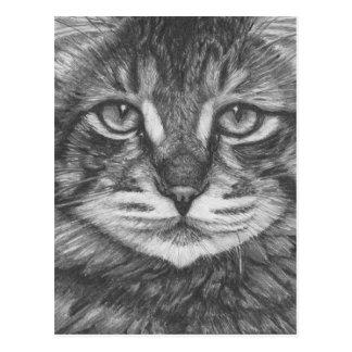 Cat postcard. Pencil drawing Postcard