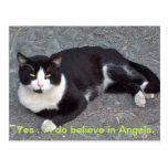Cat Postcard with humourus saying