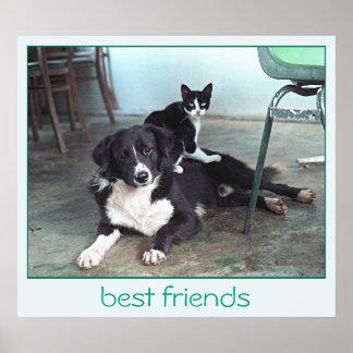 Cat Poster Dog Poster - Best Friends