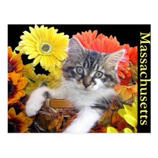 Cat Power, Maine Coon Kitty Cat Kitten, Flower Pot Postcard