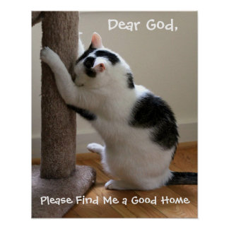 Cat Praying Poster