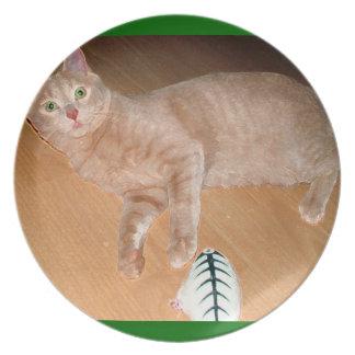 CAT PRECIOSO PLATO
