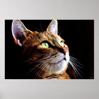 Cat - print/poster
