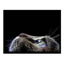 Cat Profile Postcard