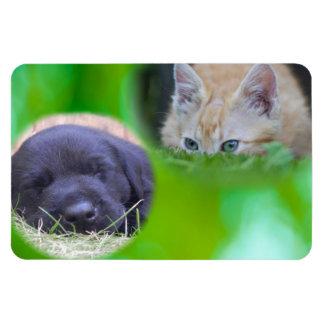 Cat & Pup Premium Flexi Magnet