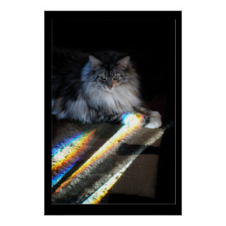Cat Rainbow Bridge Photo Poster