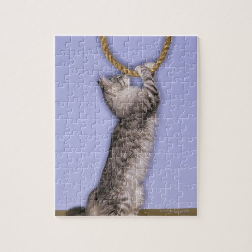 Cat reaching for rope jigsaw puzzles
