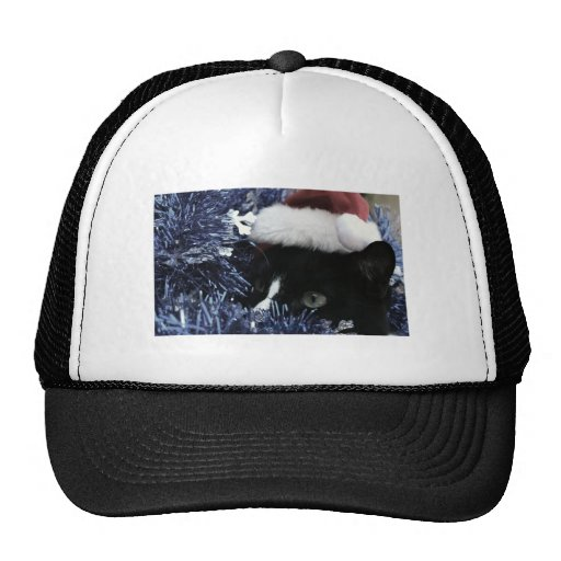 Cat ready to pounce behind blue tinsel, faded tint trucker hat