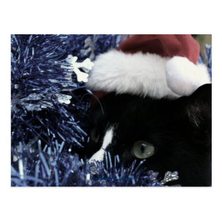 Cat ready to pounce behind blue tinsel, faded tint postcards