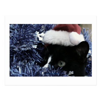 Cat ready to pounce behind blue tinsel, faded tint post card