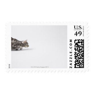 Cat ready to pounce postage stamp