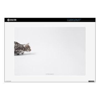 Cat ready to pounce decal for laptop