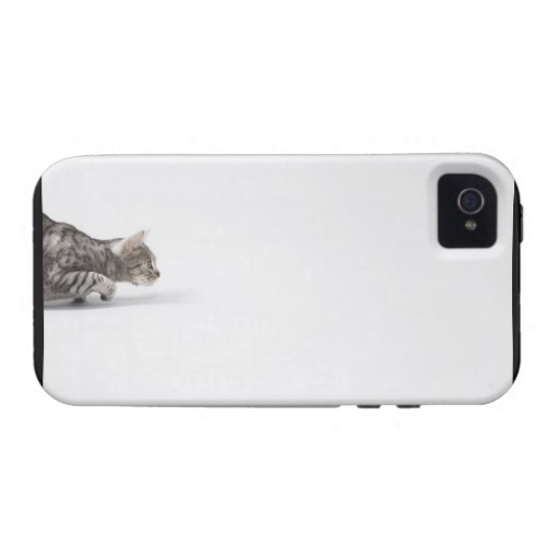 Cat ready to pounce vibe iPhone 4 cases