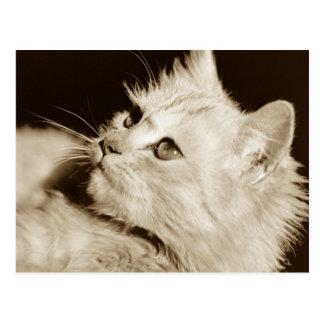 Cat reclining postcard