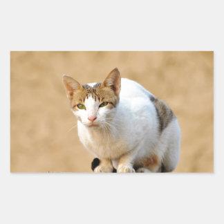 Cat Rectangular Sticker