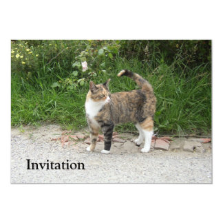 Cat  'Red' is angry 5x7 Paper Invitation Card