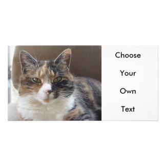 Cat 'Red' portrait Photo Greeting Card