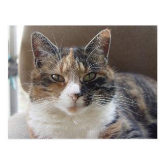 Cat 'Red' portrait Postcard