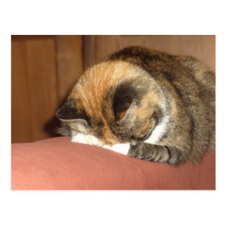 Cat 'Red' sleeping on the cough Postcard