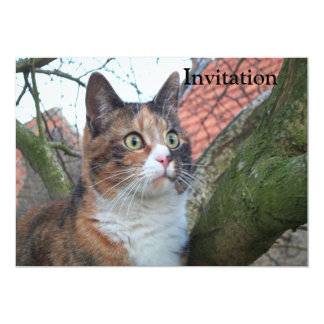 Cat 'Red' with big eyes 5x7 Paper Invitation Card