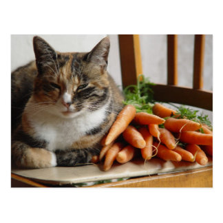 Cat 'Red' with Carrots Postcard