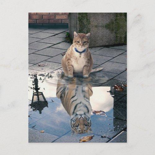 Cat reflection - fat cat - cat memes -  cute cats postcard