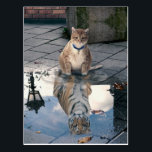 "Cat reflection - fat cat - cat memes -  cute cats postcard<br><div class=""desc"">funny cats , cute cats , pet kitty feline paw , mirror humor art kittens , tabby orange sitting lover,  kitten animal domestic fluffy,  adorable beautiful animals pretty , looking love pets tiger , wildlife wild nature beauty , predator carnivore safari wildcat</div>"