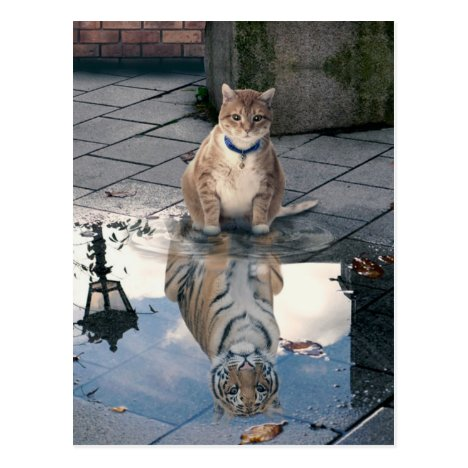 Cat reflection - fat cat - cat memes -  cute cats postcard