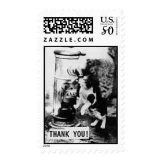 Cat Refreshing in Fountain | Thank you Postage