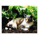 Cat Relaxing in Garden Custom Announcements