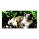 Cat Relaxing in Garden Picture Card