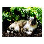 Cat Relaxing in Garden Post Cards