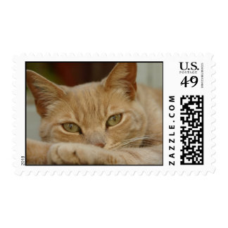 Cat relaxing. postage stamp