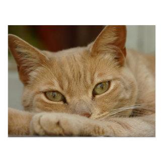 Cat relaxing. postcard