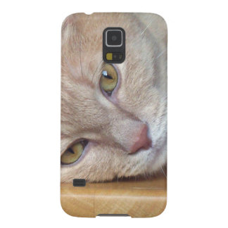 Cat resting galaxy s5 case