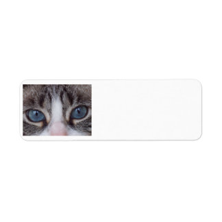 Cat return address label - blue eyes