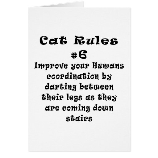 Cat Rules Number 6 Cards