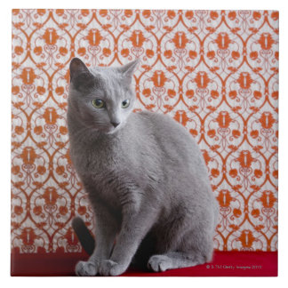 Cat (Russian blue) and wallpaper background Ceramic Tile