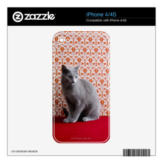 Cat (Russian blue) and wallpaper background iPhone 4S Decals