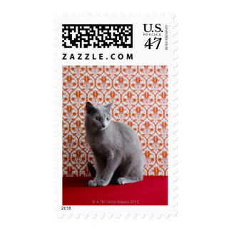 Cat (Russian blue) and wallpaper background Postage Stamp